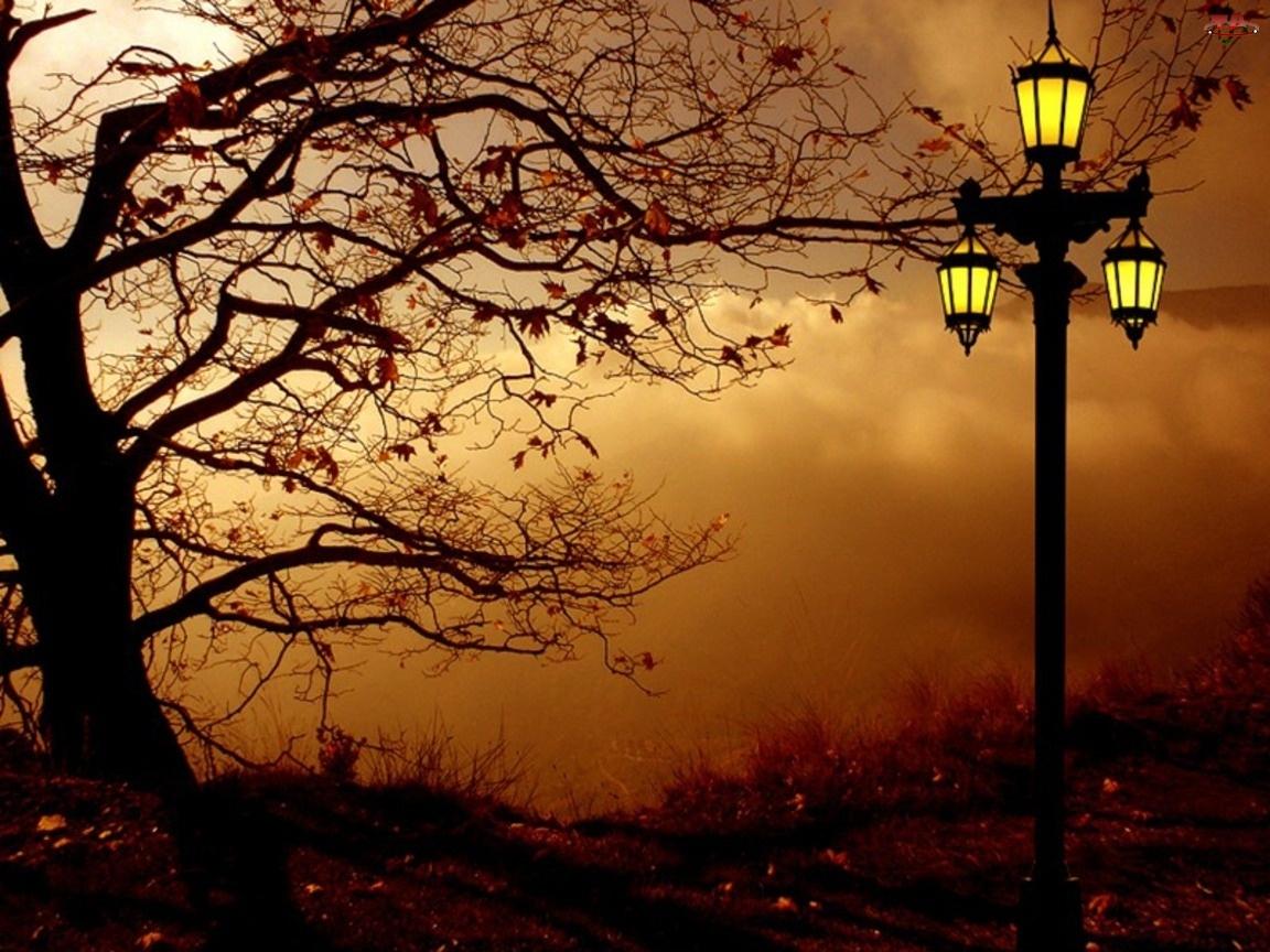 Lampa, Jesień, Drzewo