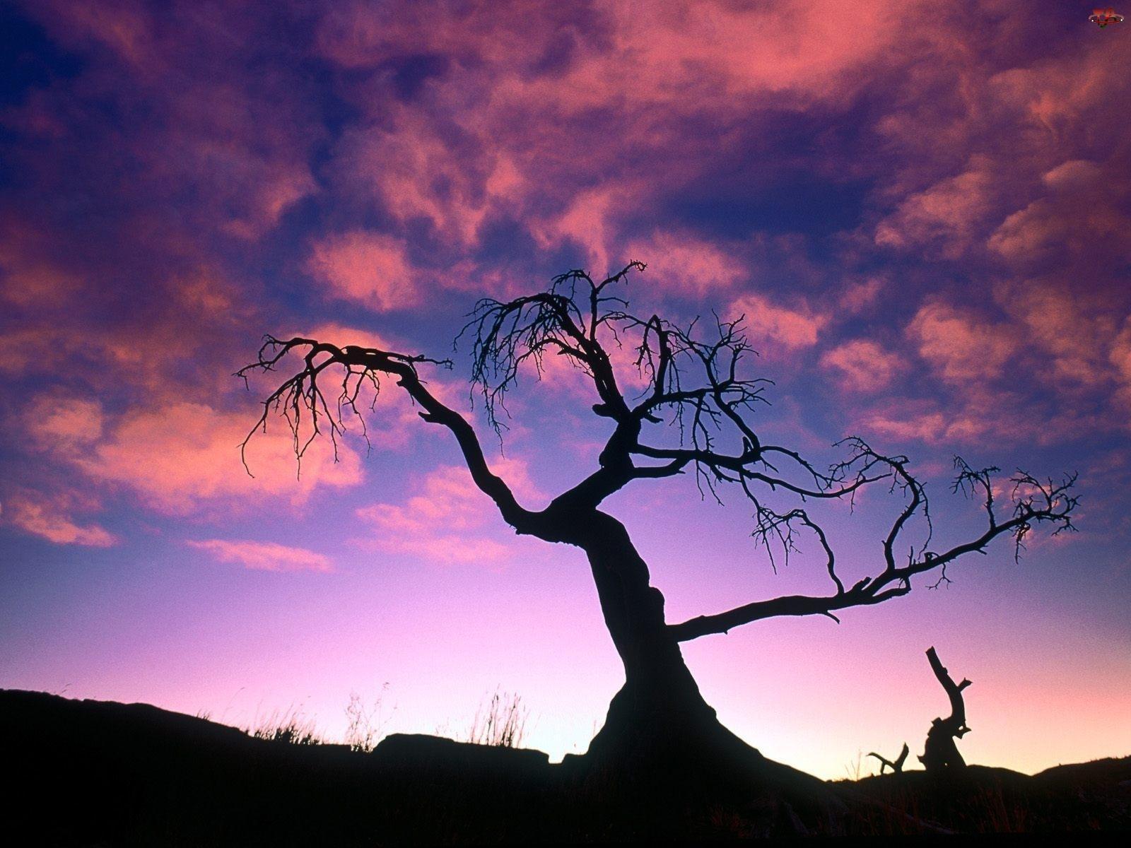 Suche, Niebo, Drzewo, Fioletowe