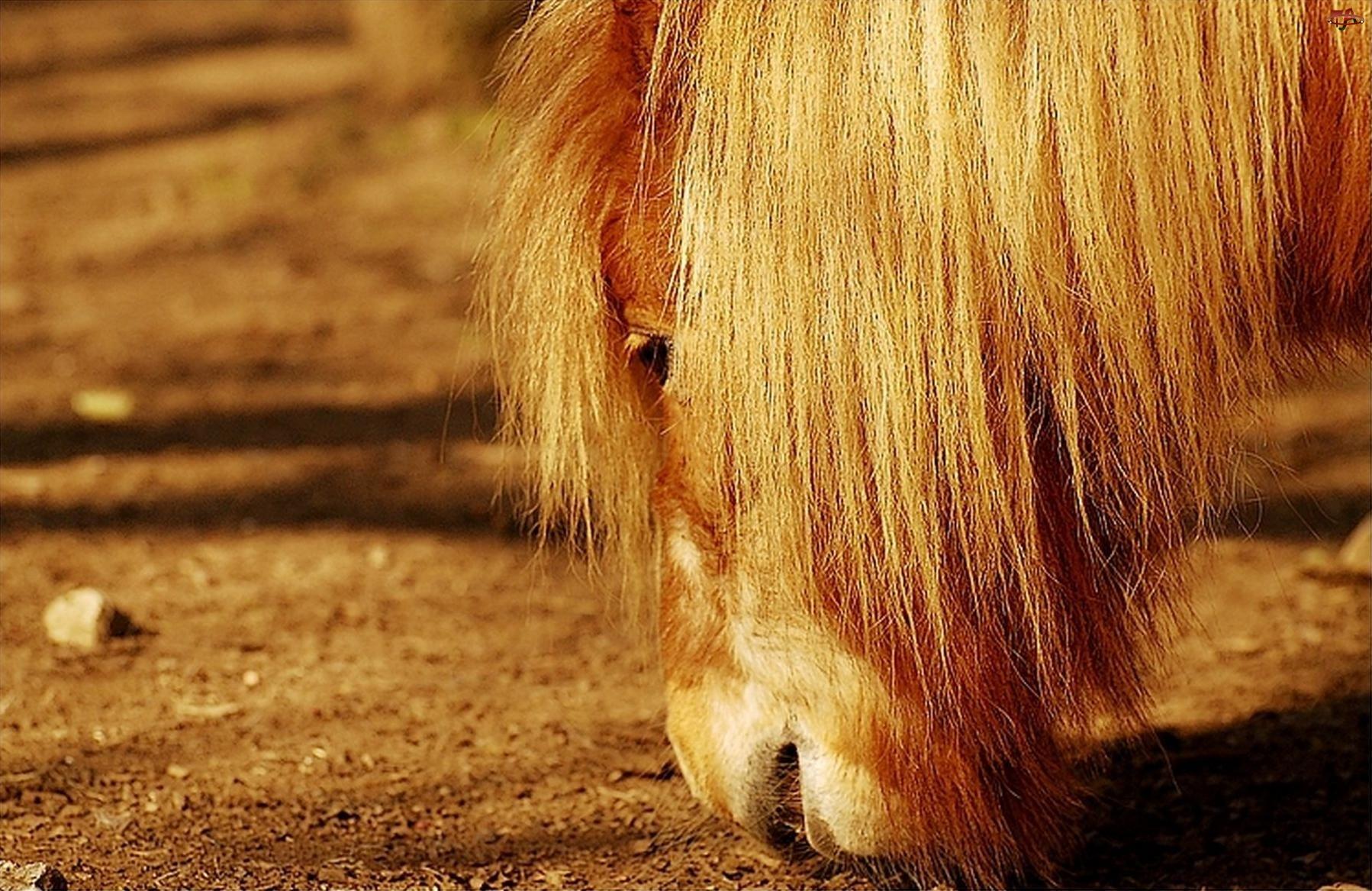 Koń, Grzywa