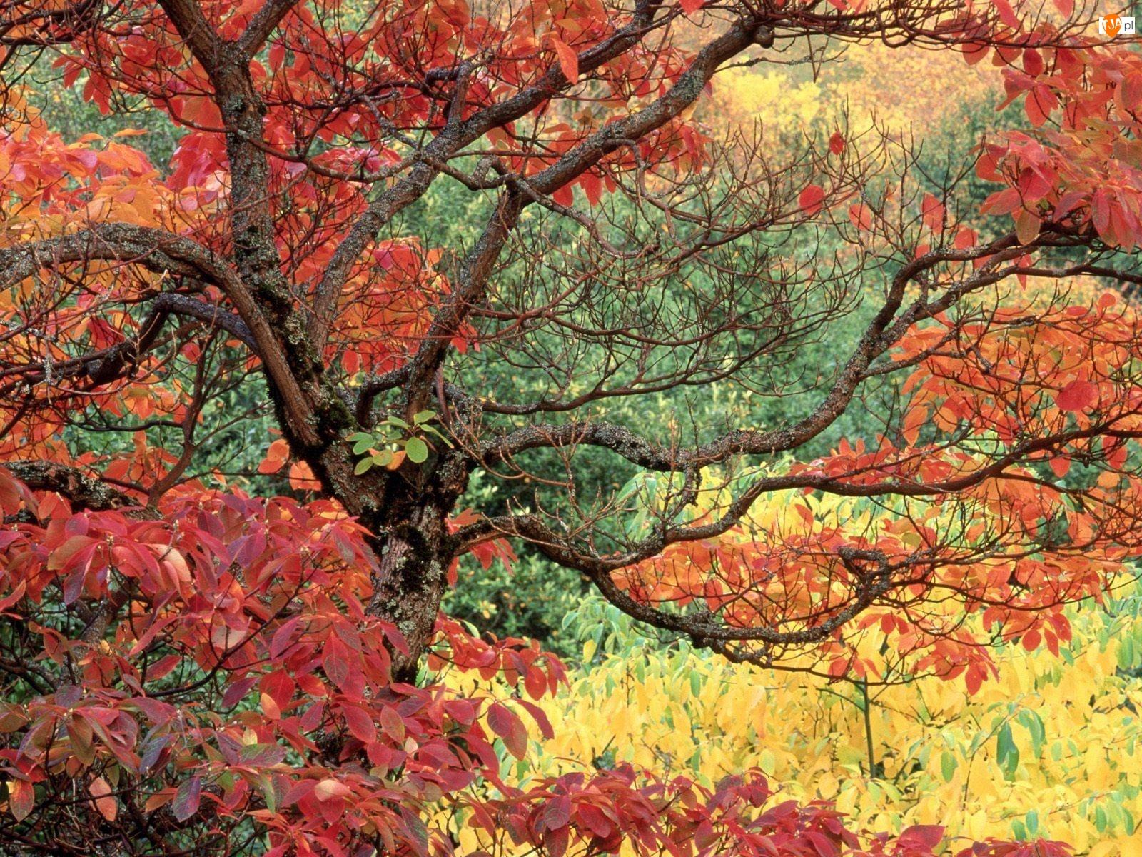 Powyginane, Liście, Drzewa, Kolorowe