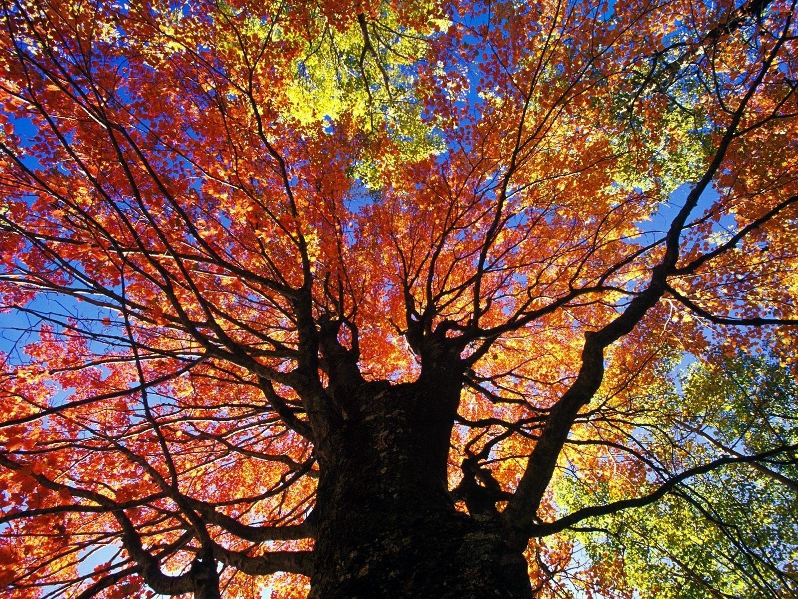 Jesienne, Liście, Drzewo, Kolorowe
