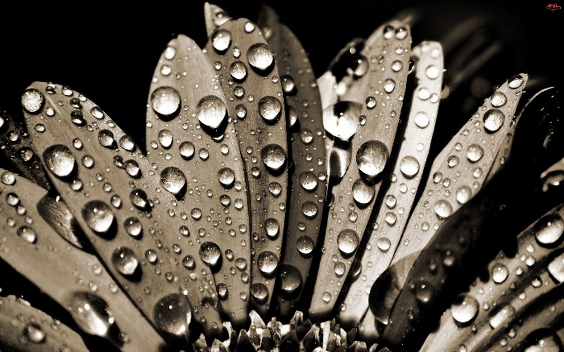 Wody, Kwiat, Krople