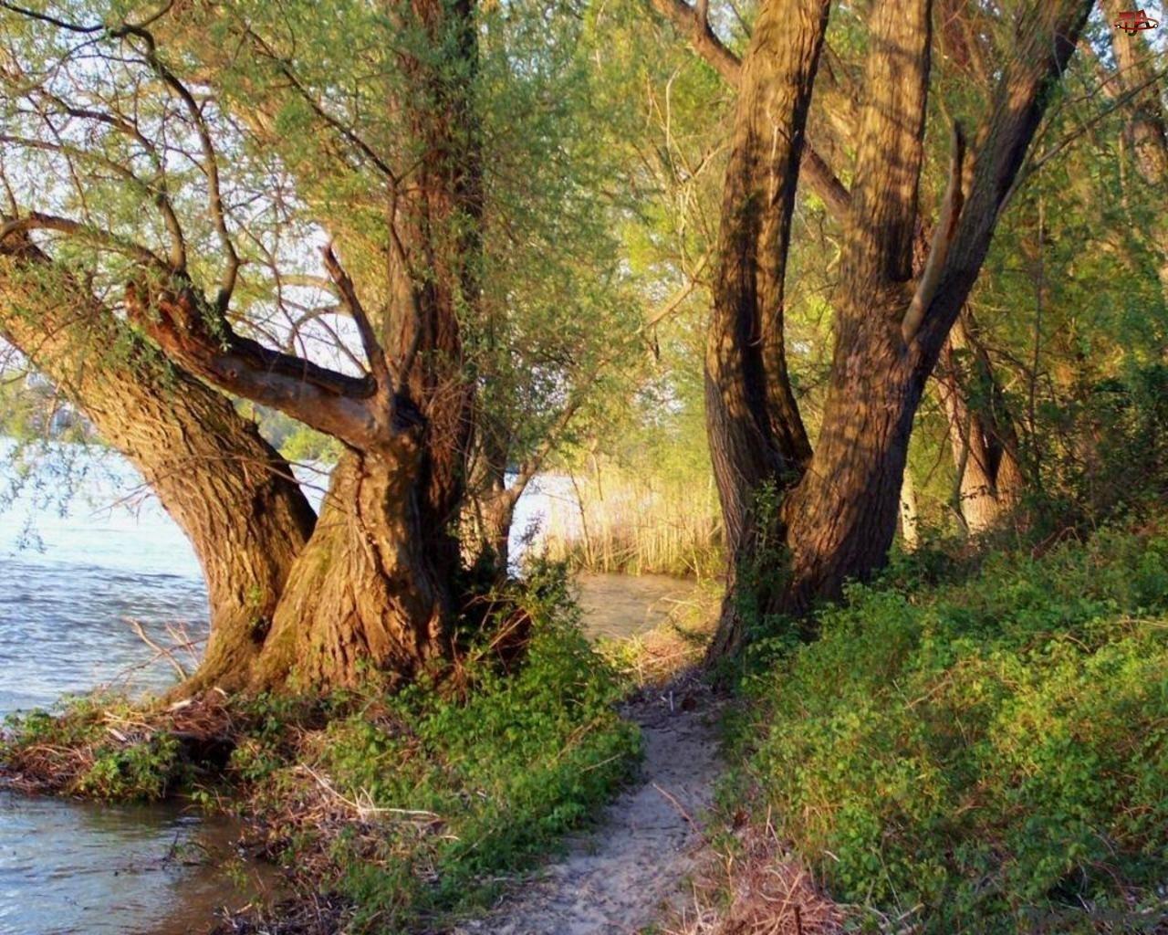 Trawy, Rzeka, Drzewa