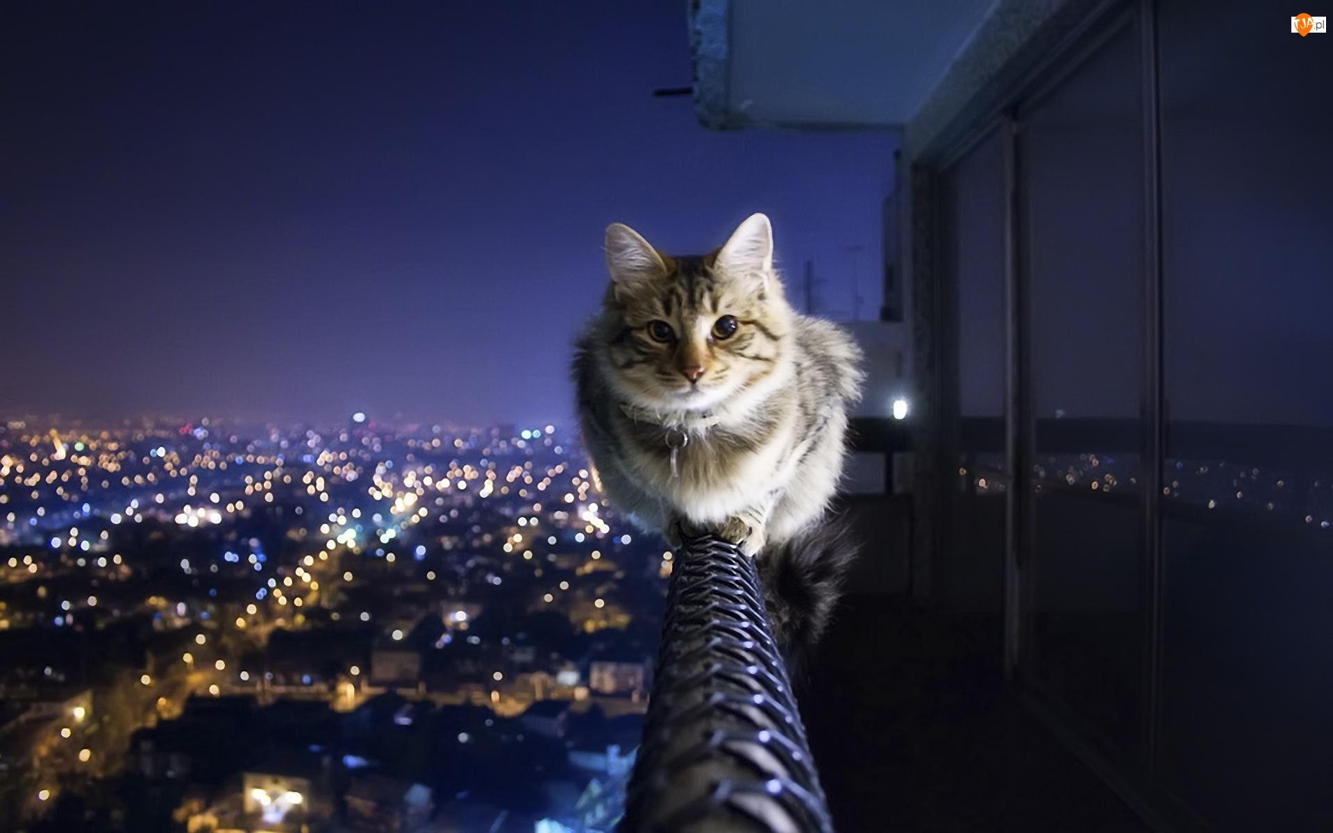 Miasto, Kot, Noc, Balustrada