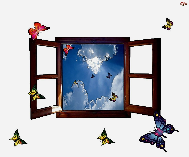 Motyle, Otwarte, Okno