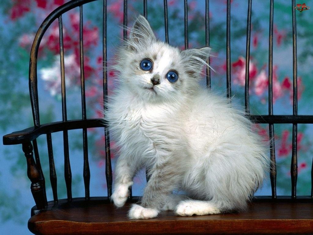 Kot, Biały, Śmieszny