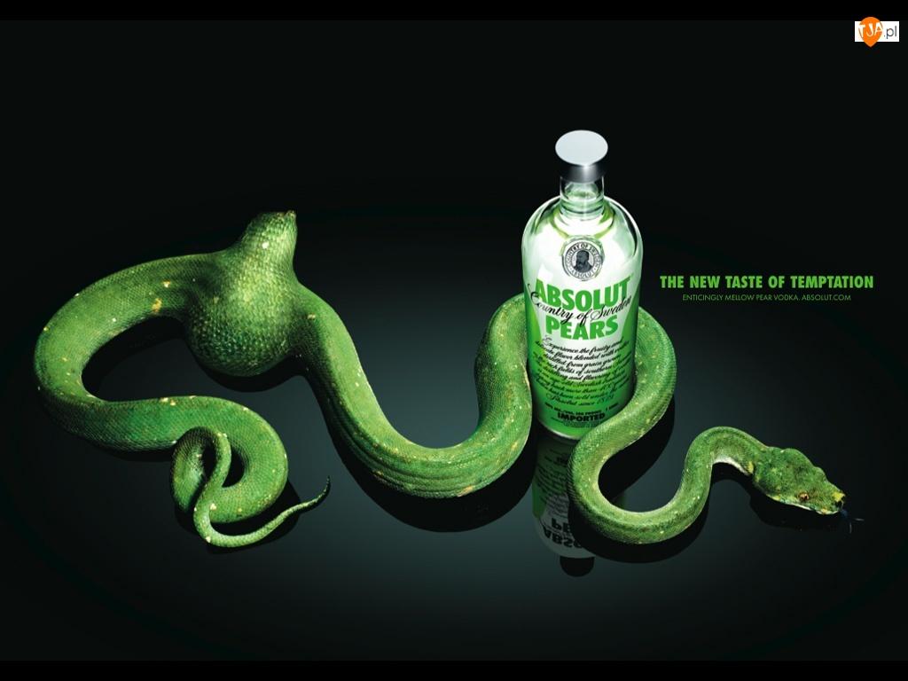 Wódka, Wąż, Absolut, Zielony