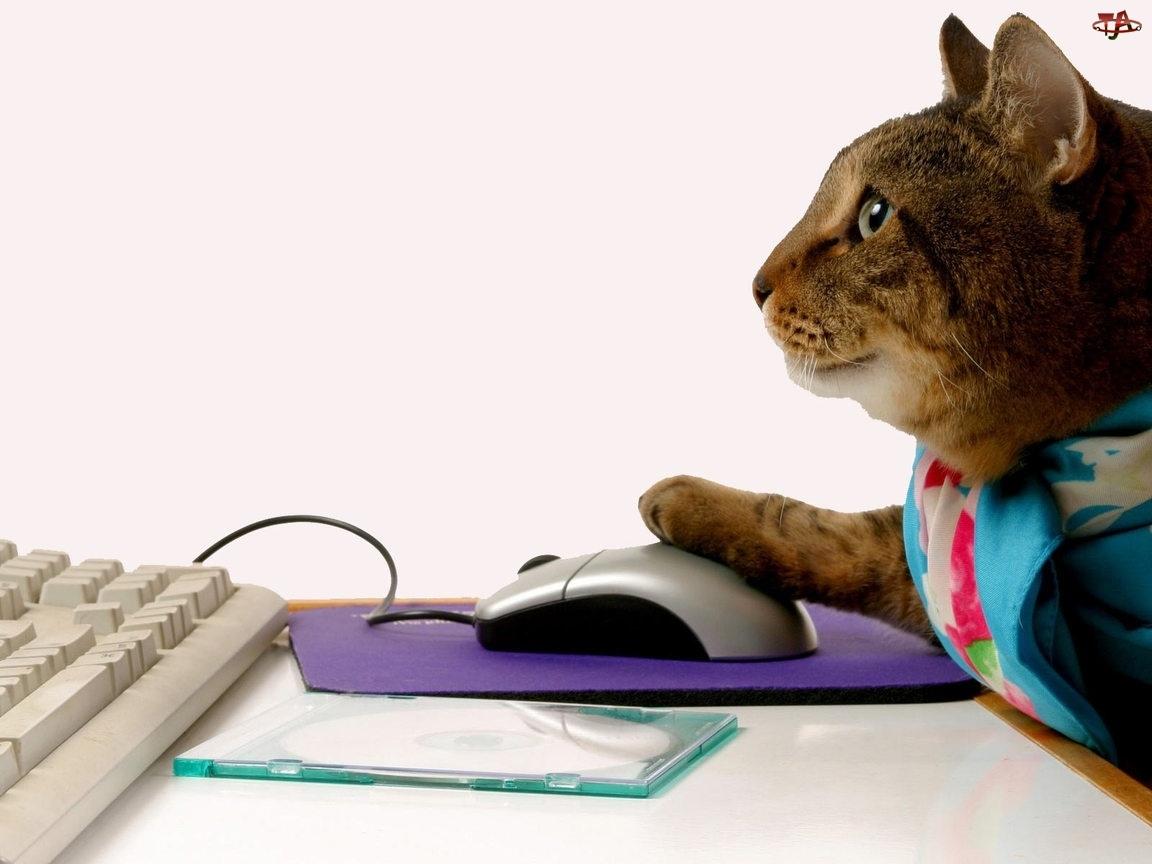 Myszka, Kot, Komputer