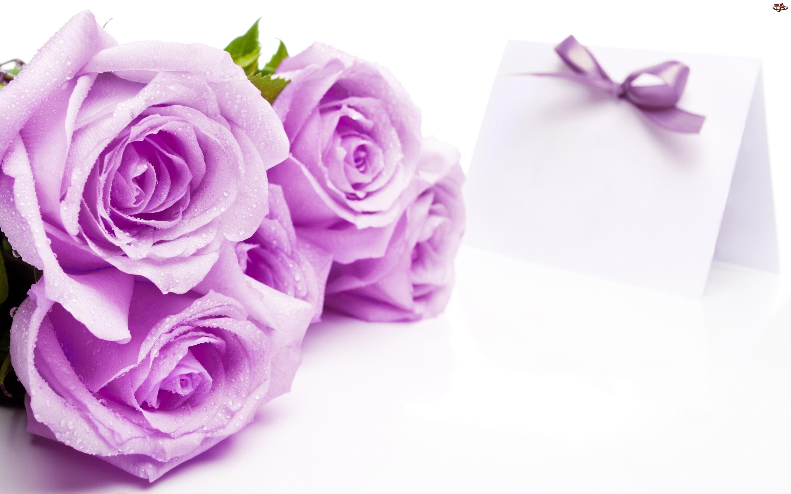 Fioletowe, Walentynki, Róże, Liścik