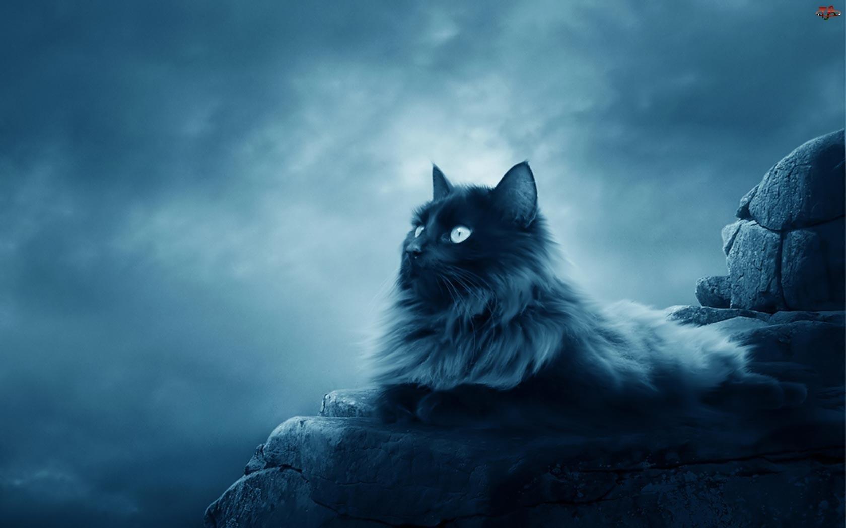 Zmierzch, Kot