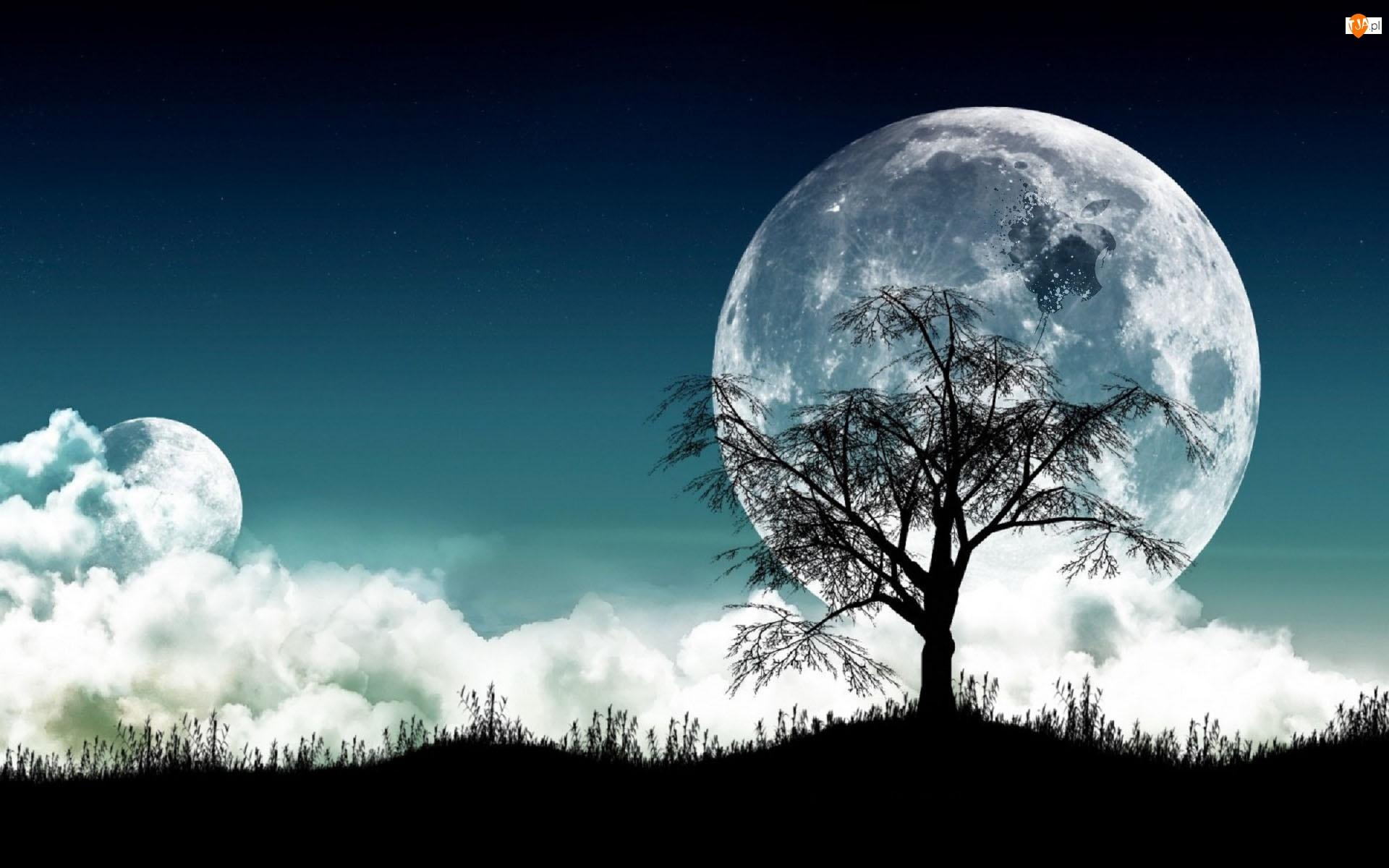 Apple, Księżyc, Noc, Drzewo, Logo