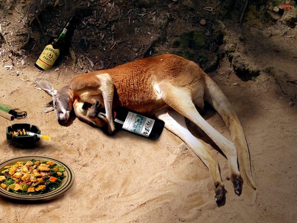 Imprezie, Kangur, Po