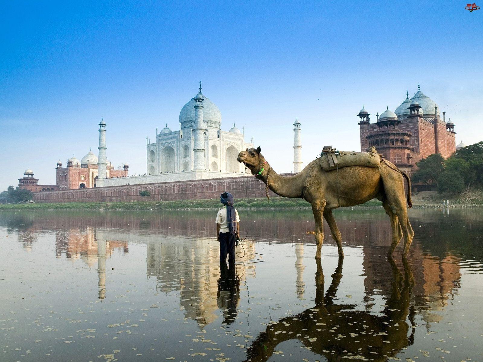 Indie, Wielbłąd, Agra