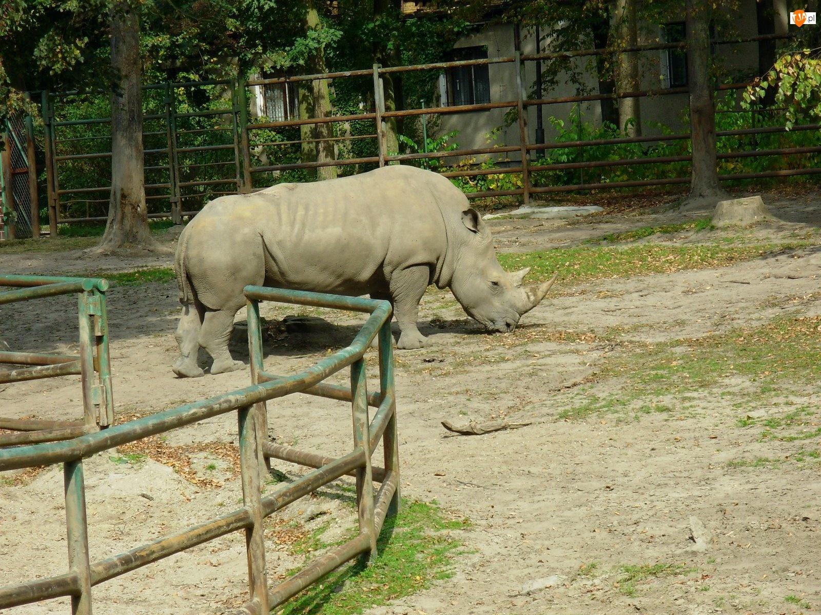 Nosorożec, zagroda