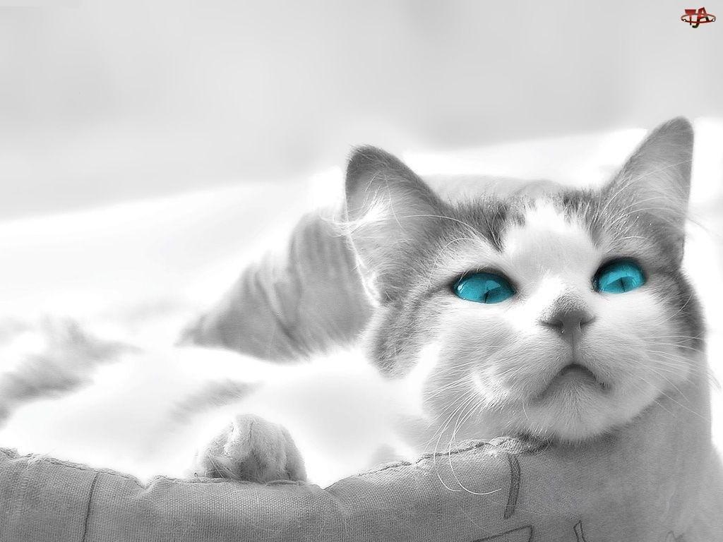 3D, worek, Wektorowa, kot