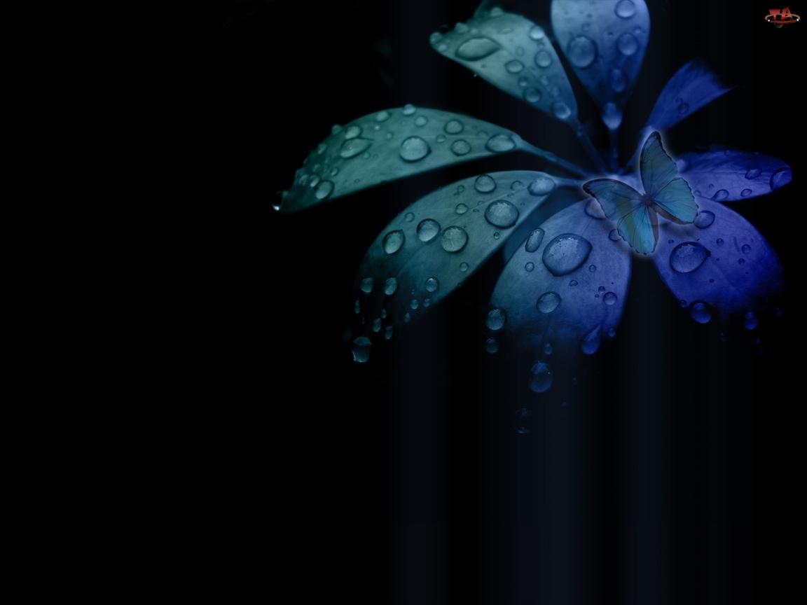Motyl, Kolorowy, Liść