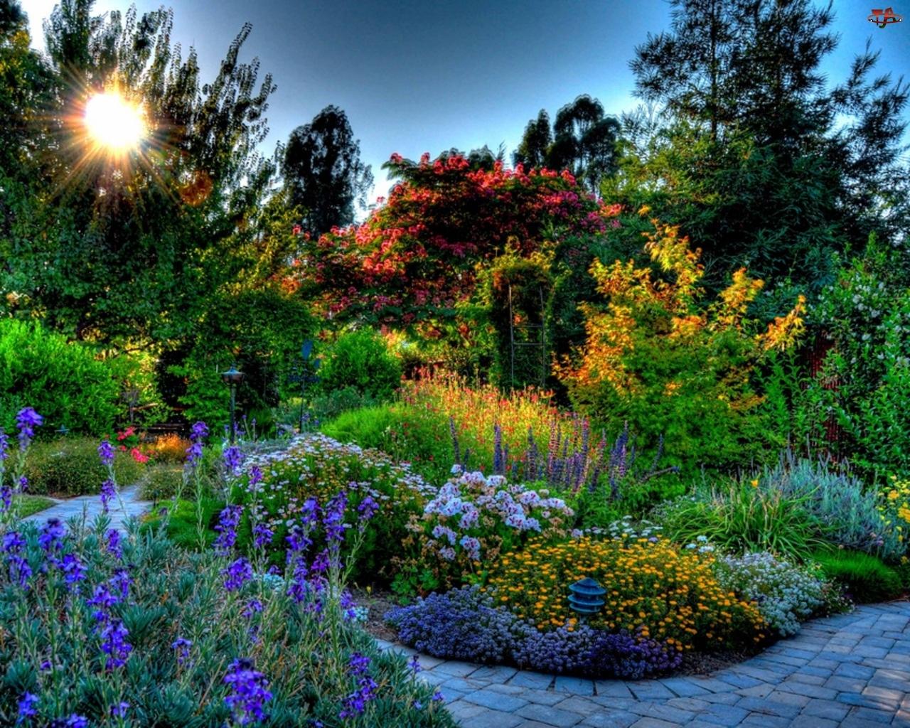 Słońce, Piękny, Ogród