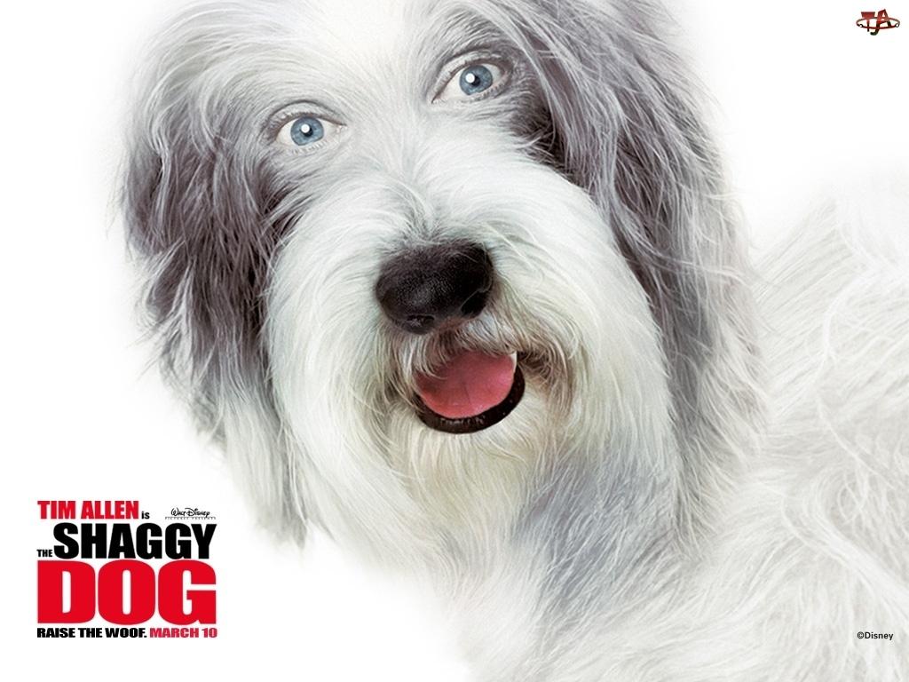 The Shaggy Dog, napis, pies, pysk