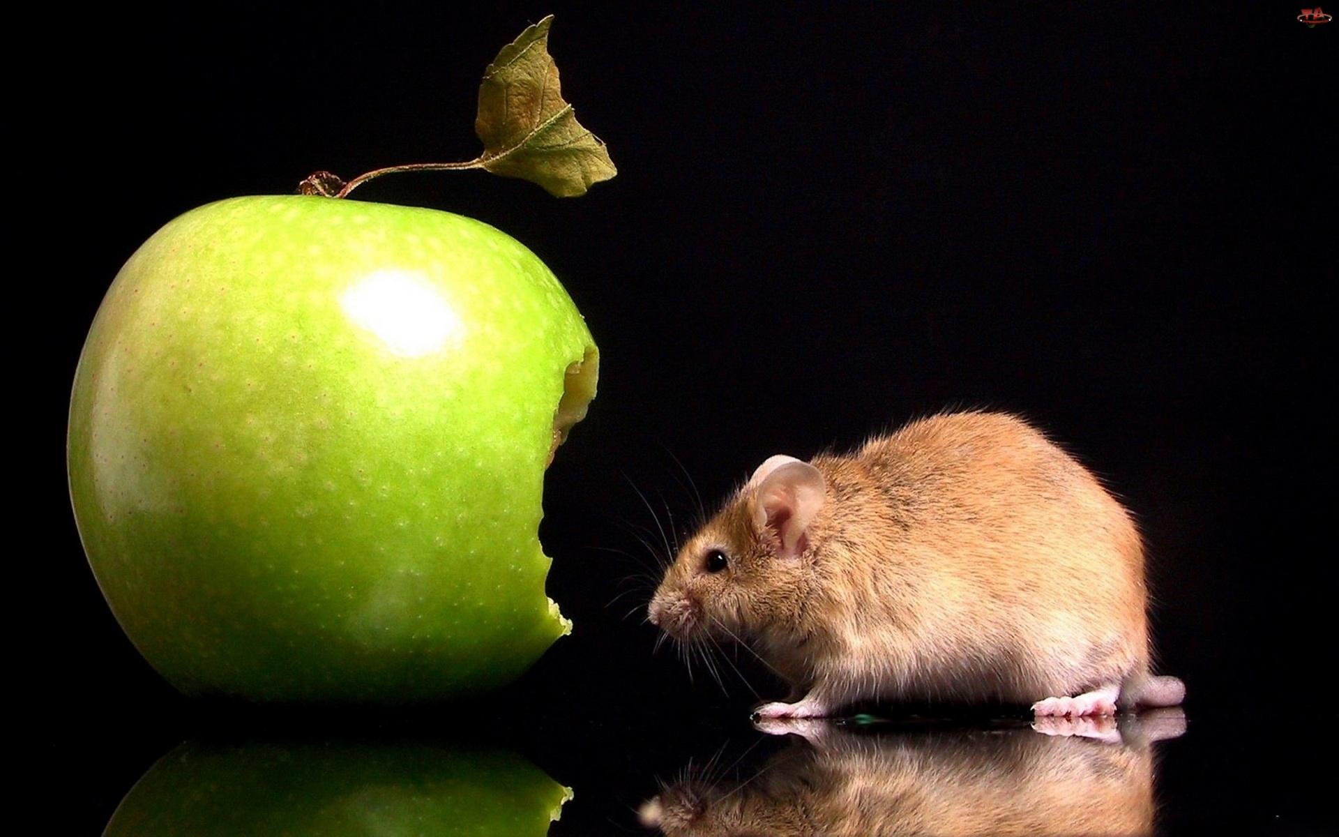 Myszka, Jabłko, Ugryzione, Zielone