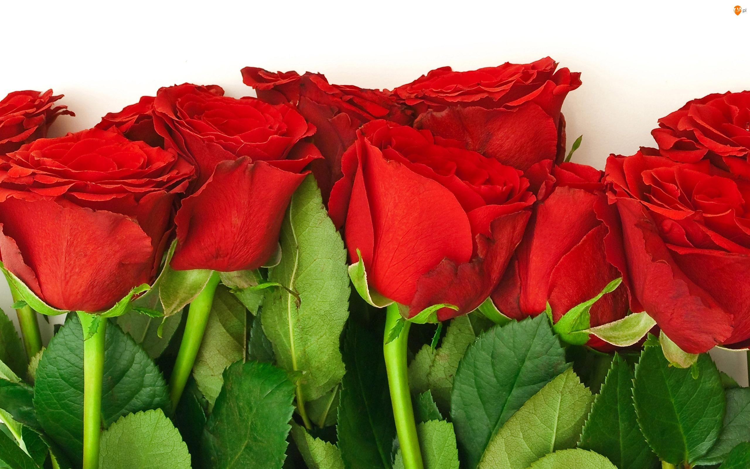 Liście, Róże, Łodygi