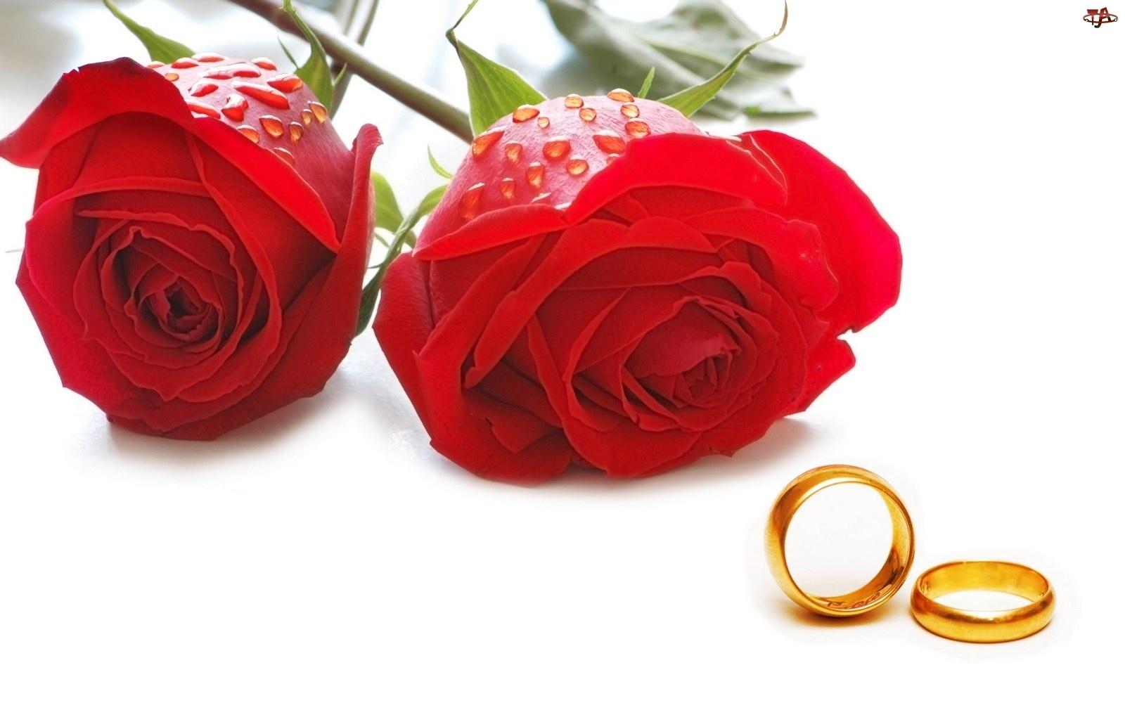 Obrączki, Czerwone, Róże