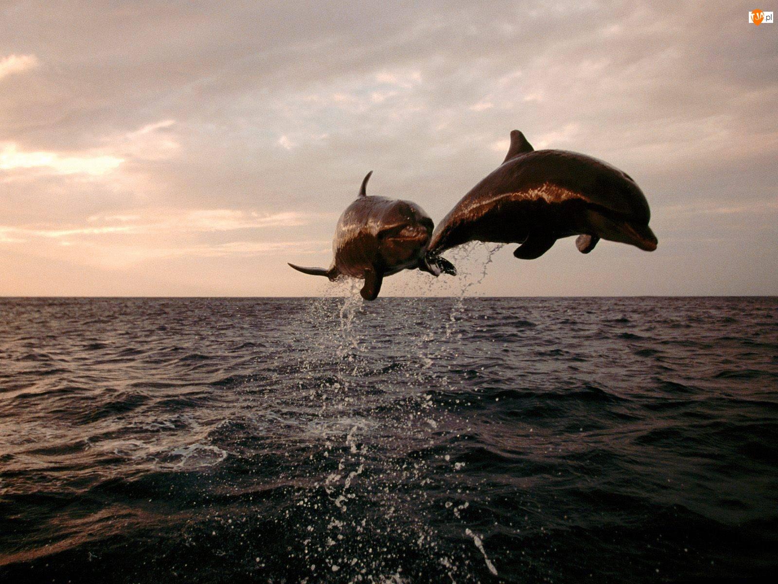 Para, Wodą, Delfinów, Ponad