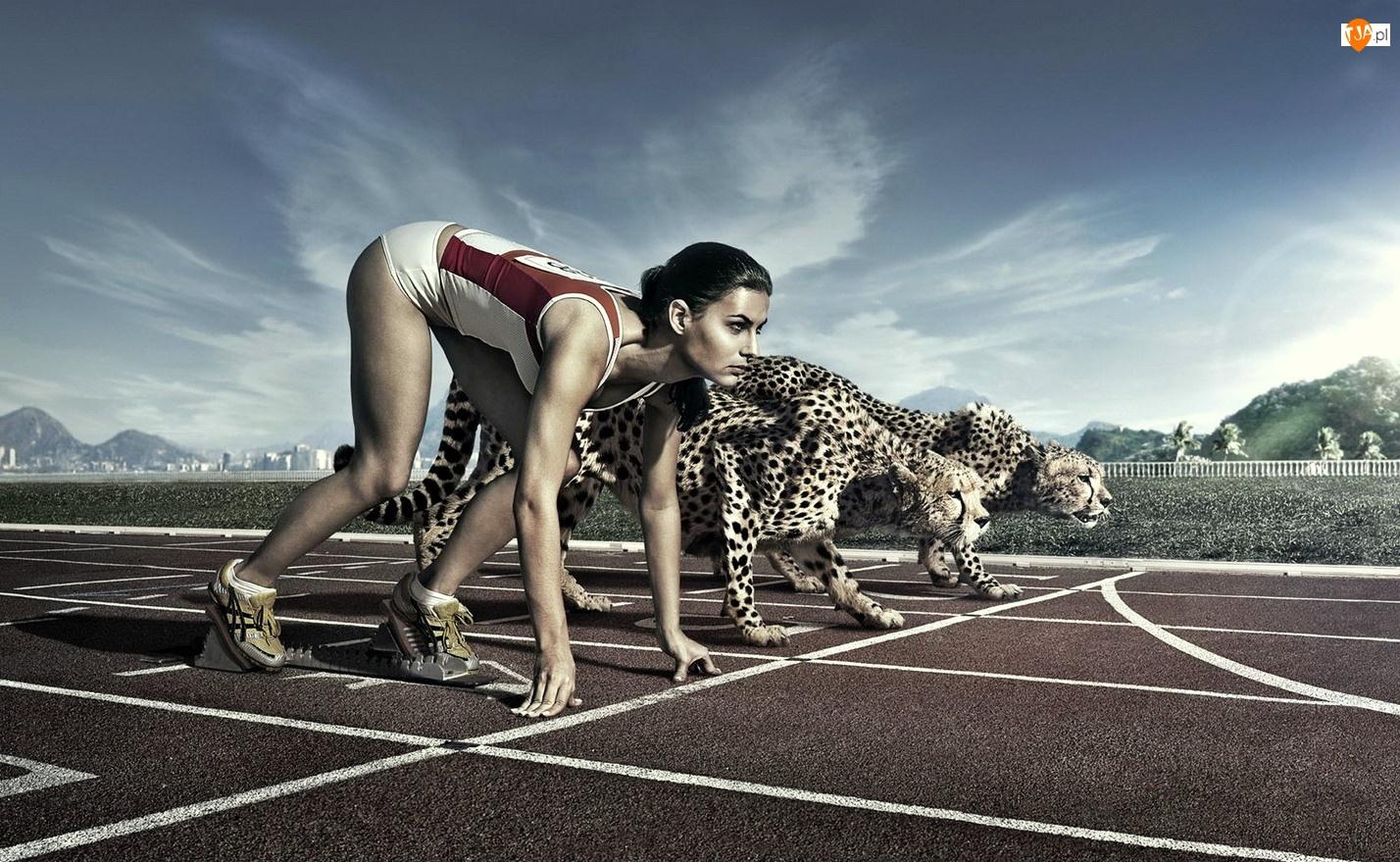 Gepard, Sport, Kobieta, Zawody, Bieżnia