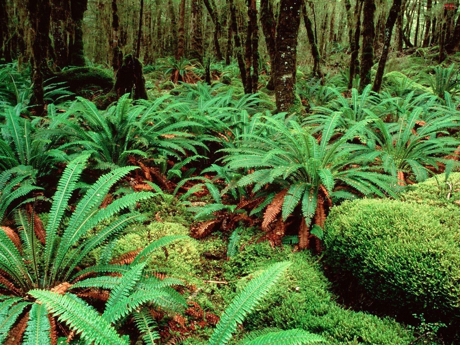 Nowa Zelandia, Krzewy, Zielone, Drzewa