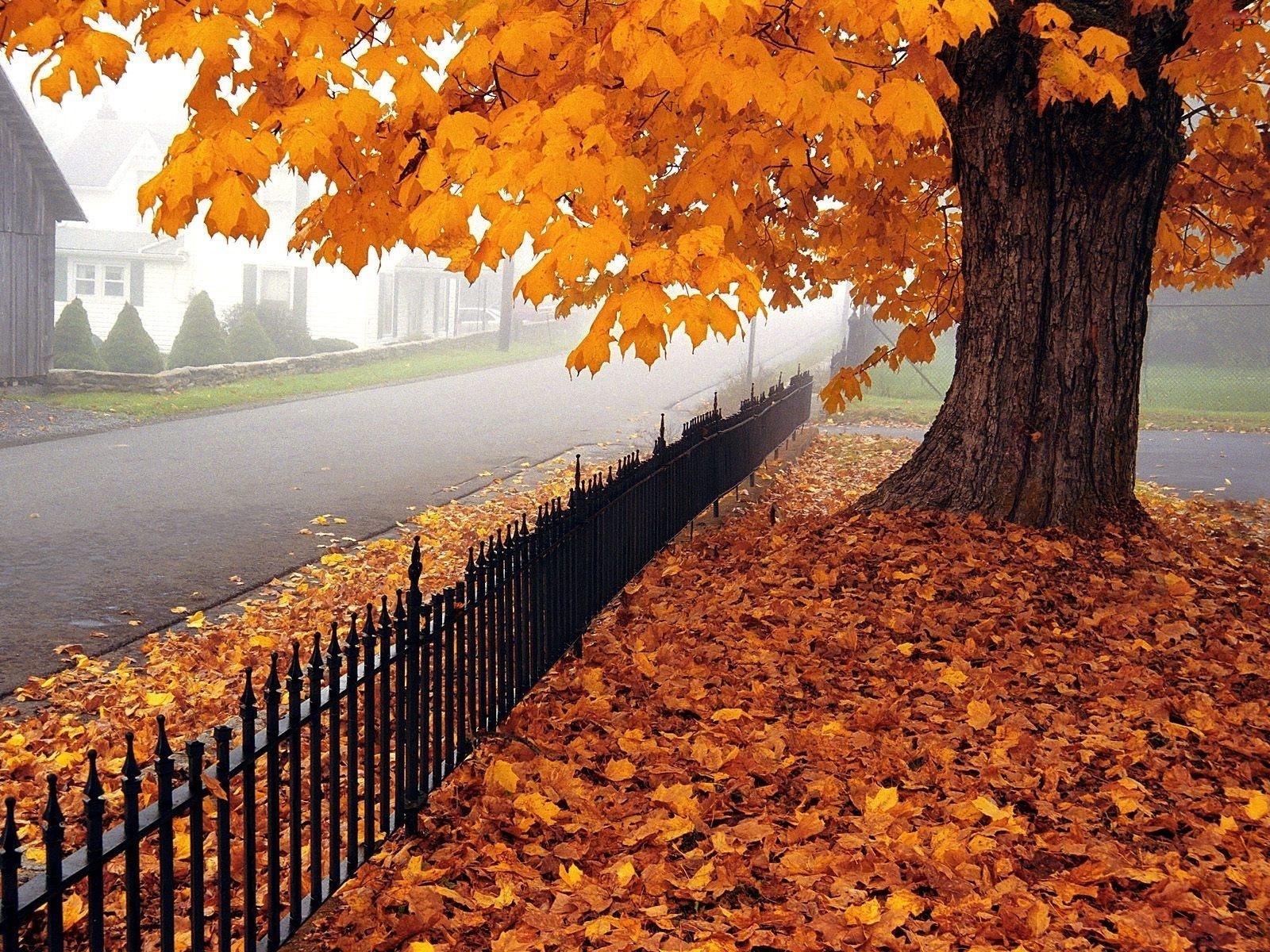 Liście, Ogrodzenie, Jesień, Ulica, Żółte, Drzewo