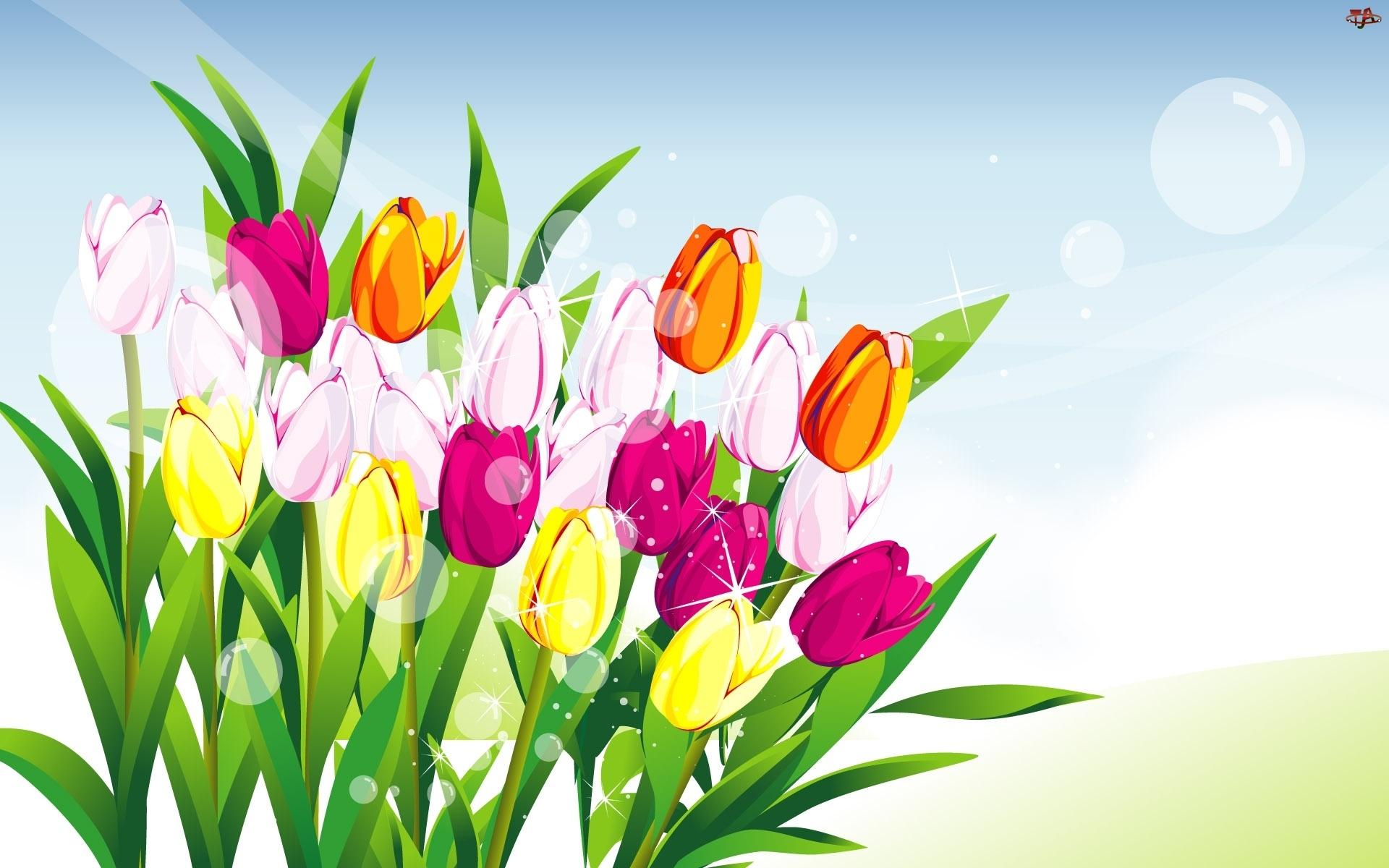 Grafika 2D, Kolorowe, Tulipany