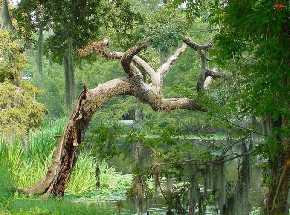 Staw, Suche, Drzewo