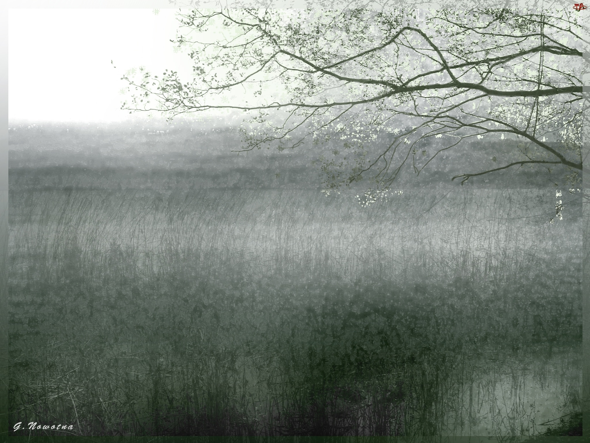 Drzewo, Jezioro, Trawy