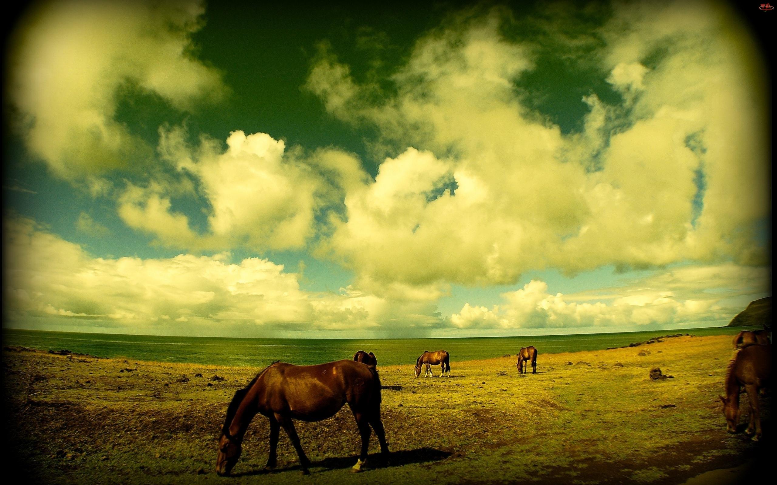 Konie, Pastwisko