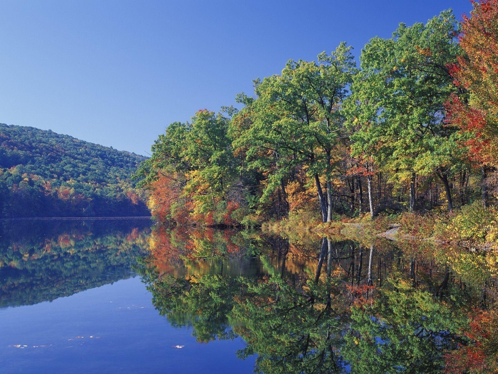 Drzewa, Jezioro, Lustrzane, Odbicie