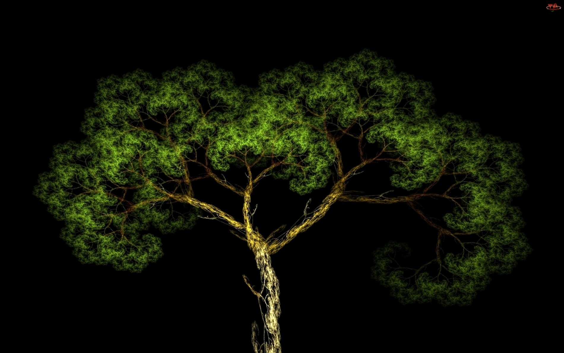 Korona, Drzewo, Konary