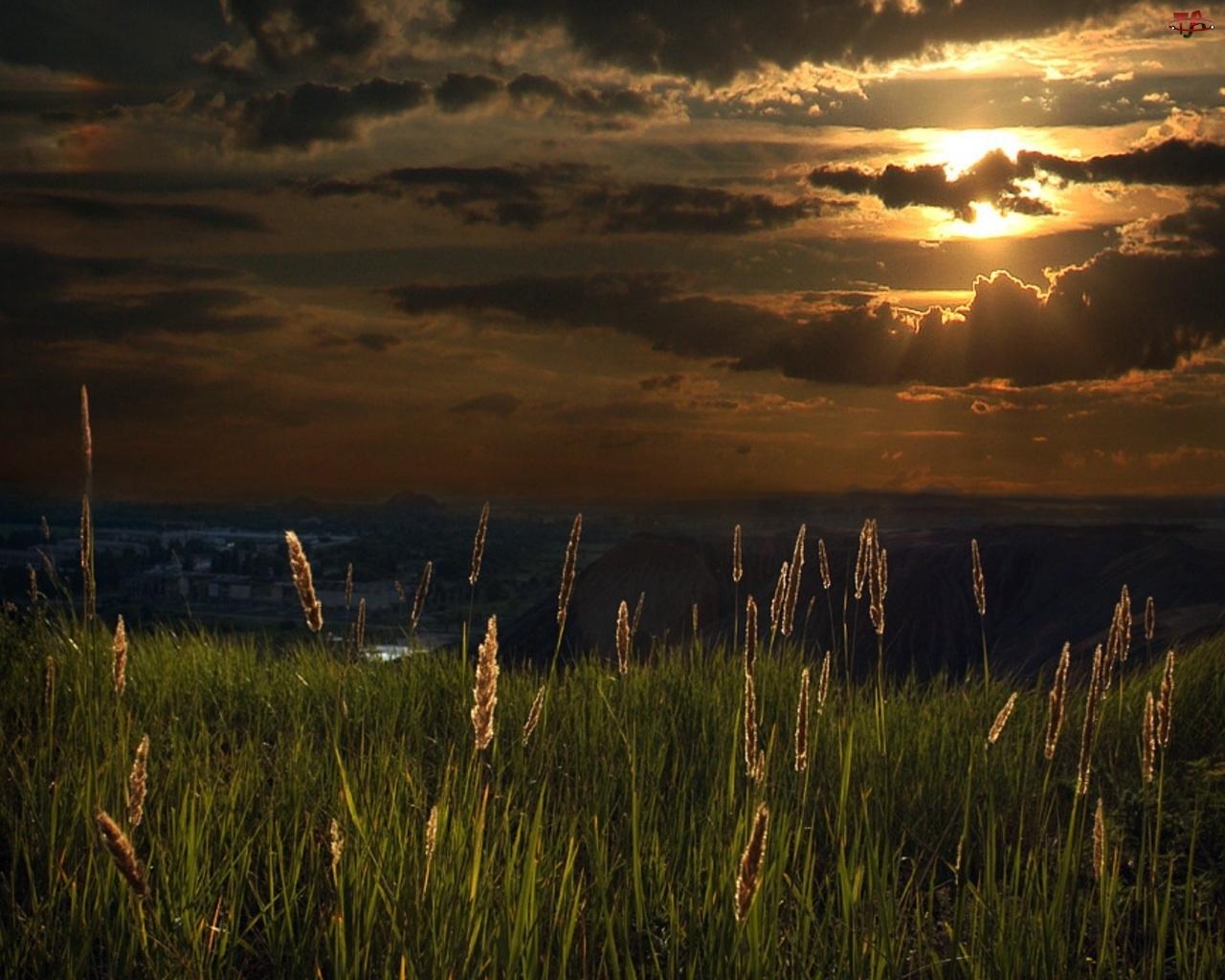 Zachód, Trawa, Słońca, Chmury