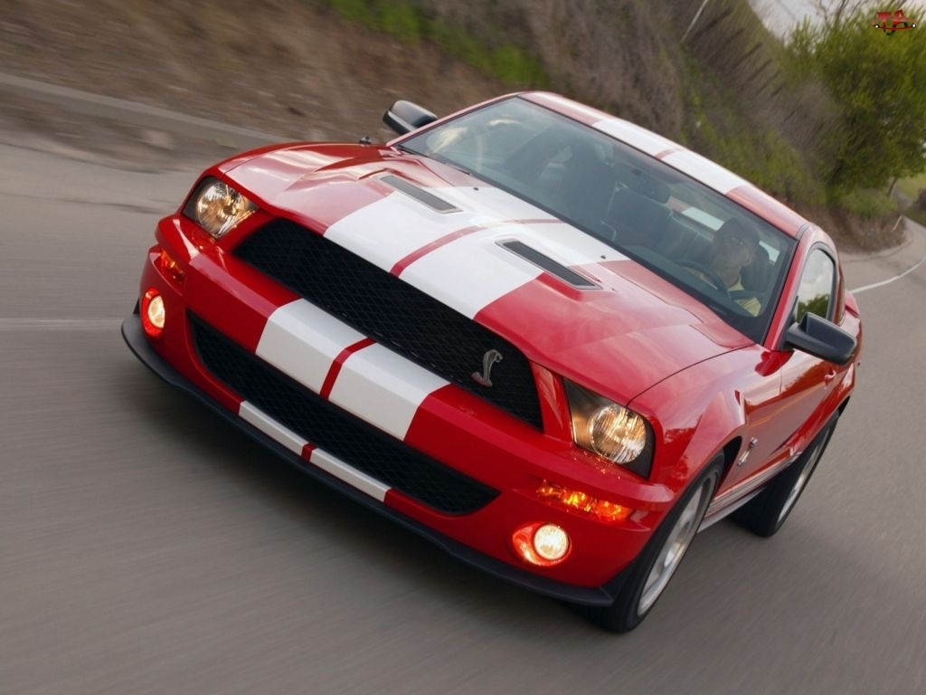 GT500, Ford Mustang, Shelby