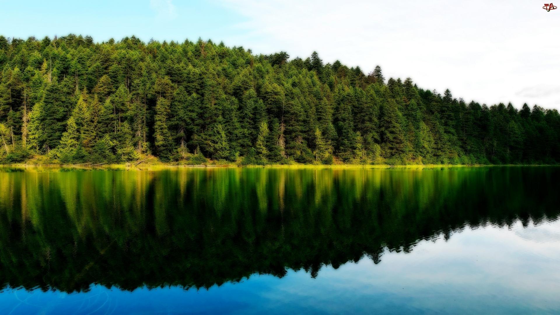 Jezioro, Drzewa, Lustrzane, Odbicie
