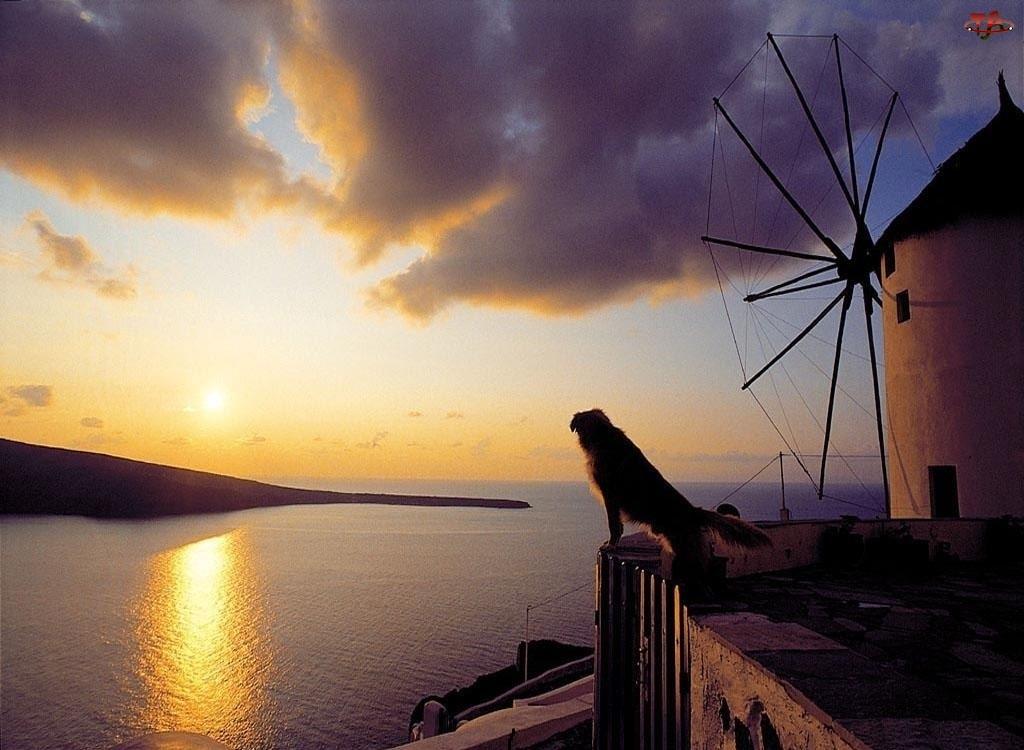 Pies, Słońca, Wiatrak, Zachód