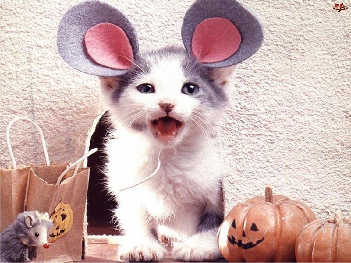 Mysz, Przebrany, Kot