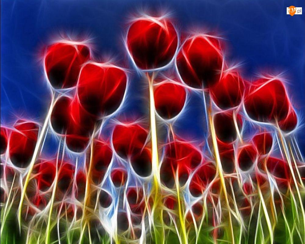 3D, Czerwone, Tulipany