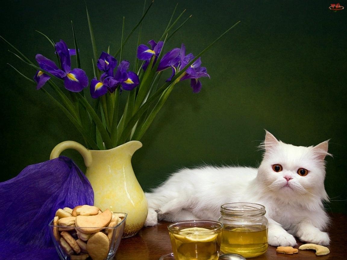Irysy, Biały, Kot