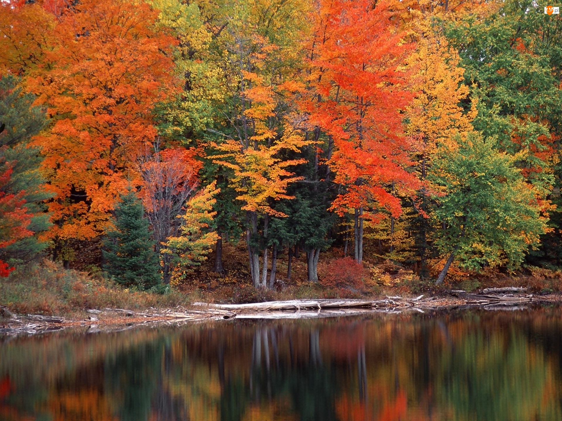 Kolorowe, Jeziorko, Drzewa, Las
