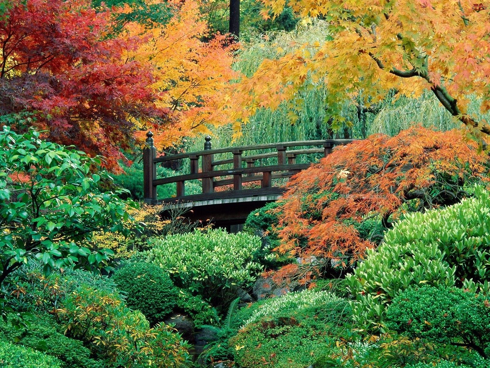 Mostek, Ogród, Krzewy, Zielone, Drzewa