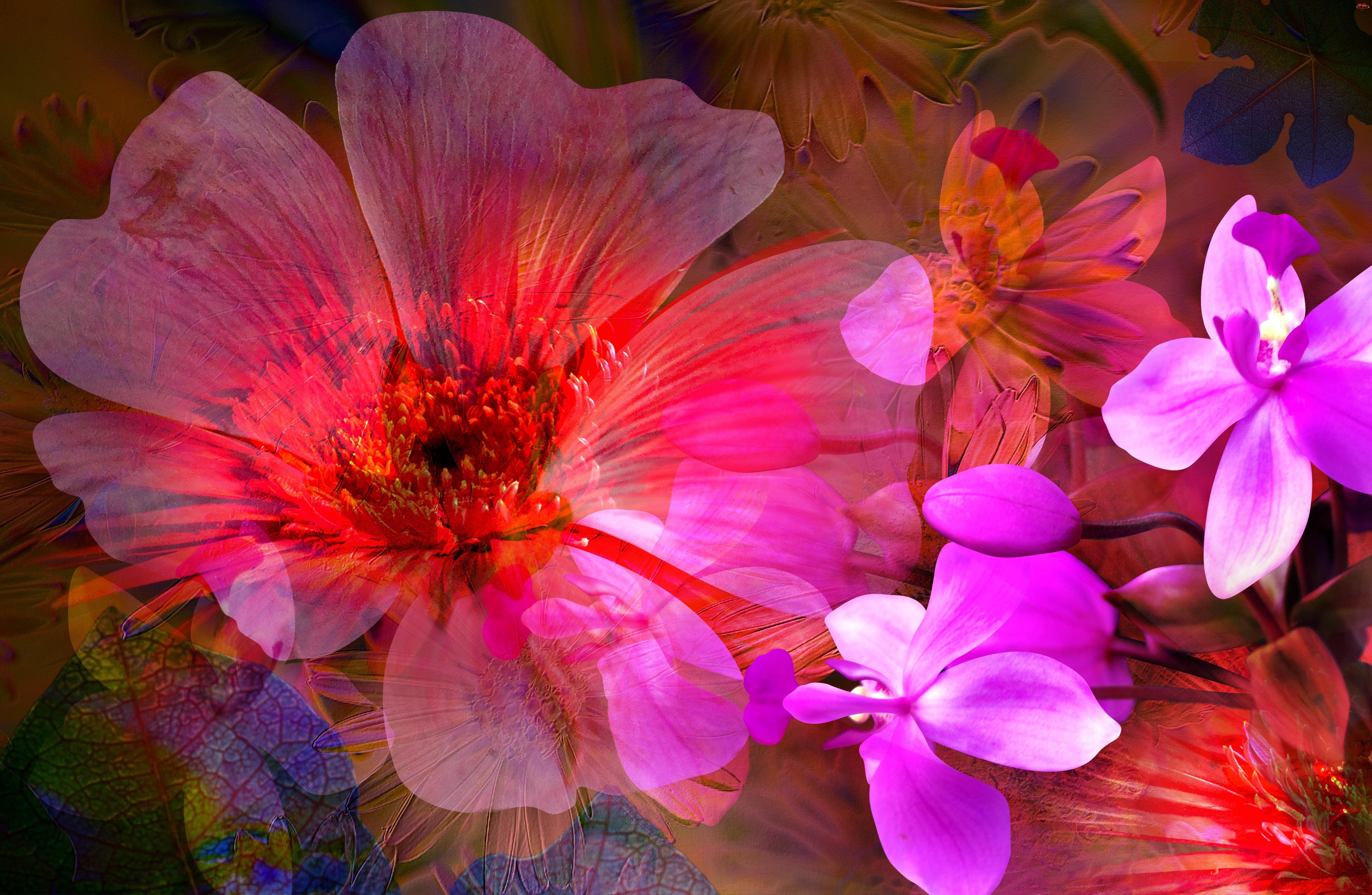 Różu, Kwiaty, Kolory