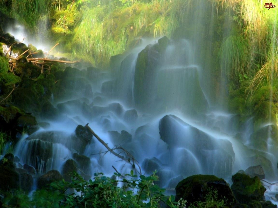 Wodospad, Drzew, Skały, Konary
