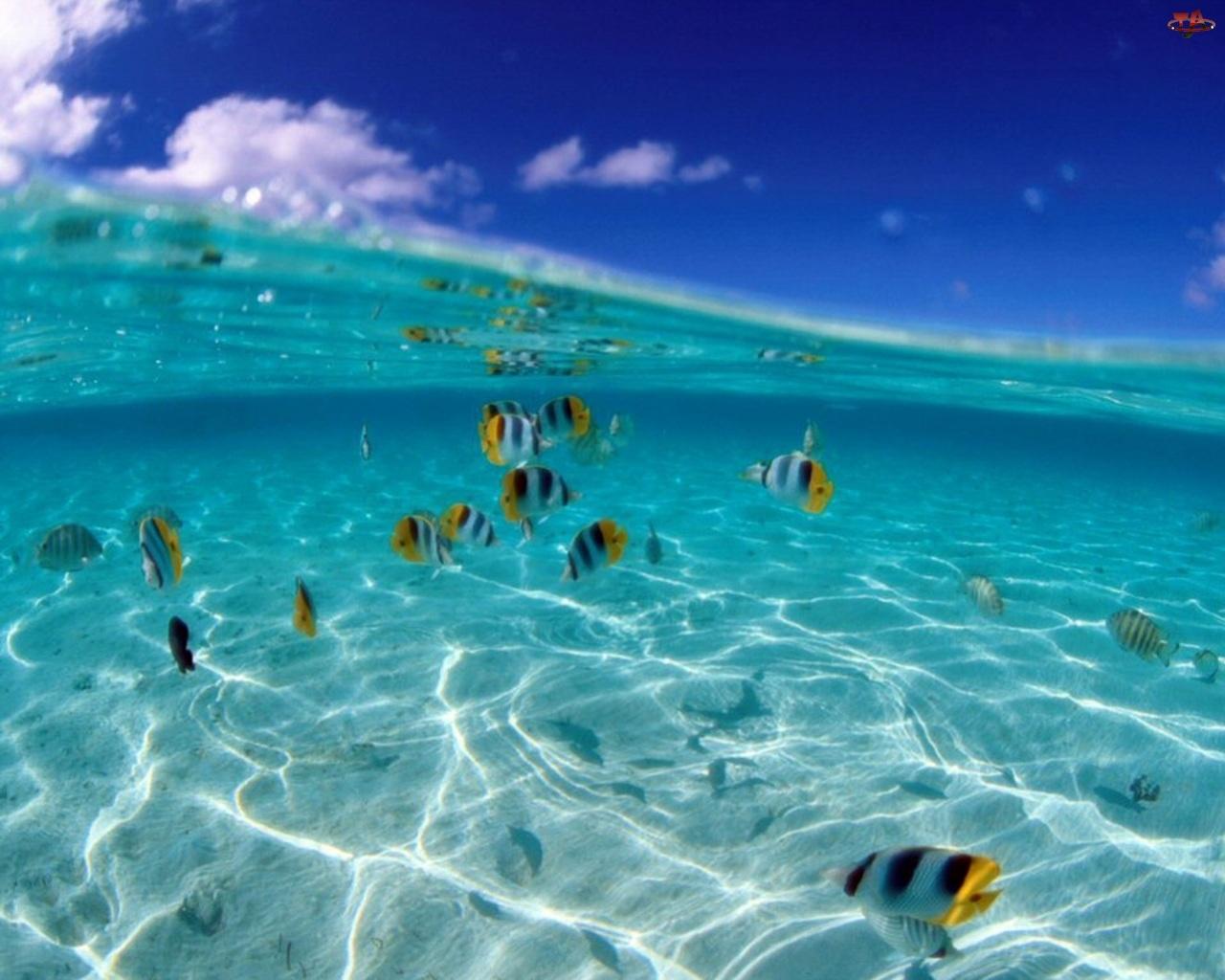 Ryby, Morze, Fala