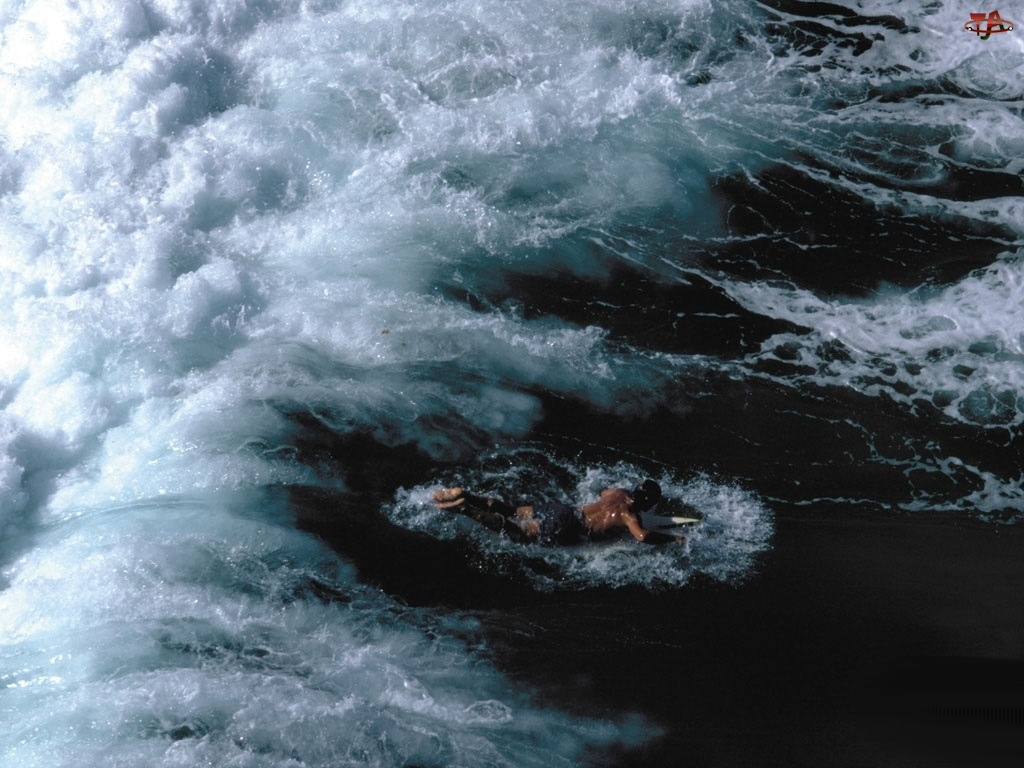 Windsurfing, fala, deska, morze