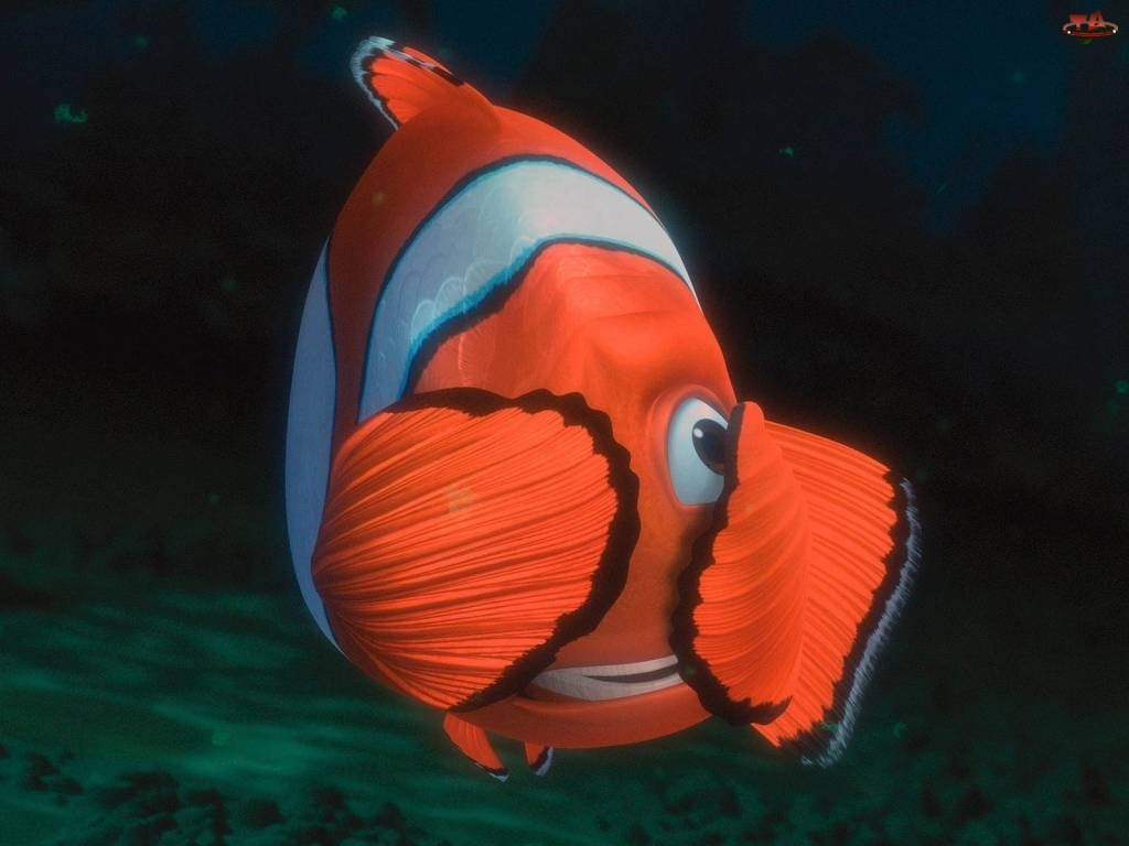Rybka, Nemo, Gdzie, Jest