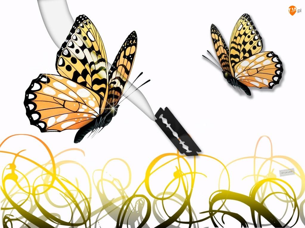 Motyl, Żyletka